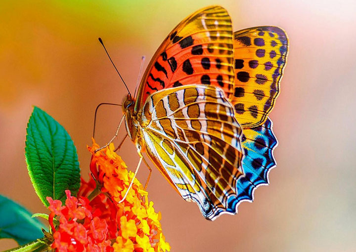 Wonderful butterflies