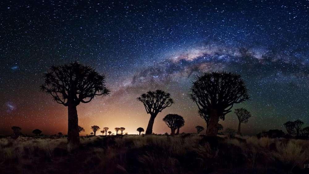Milkyway over Baobab Trees wallpaper