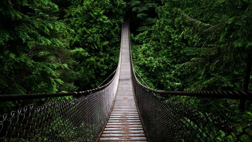 Lynn Canyon Suspension Bridge wallpaper