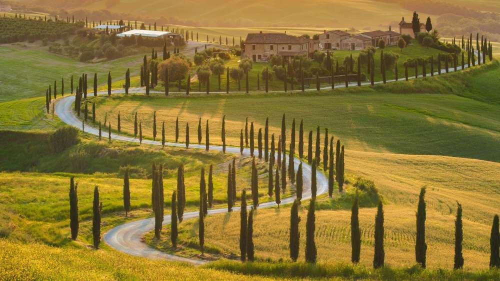 Tuscany cypreses lane wallpaper