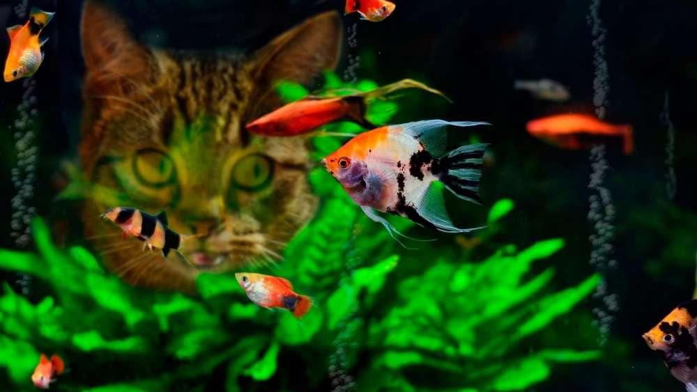 Cat with the aquarium wallpaper