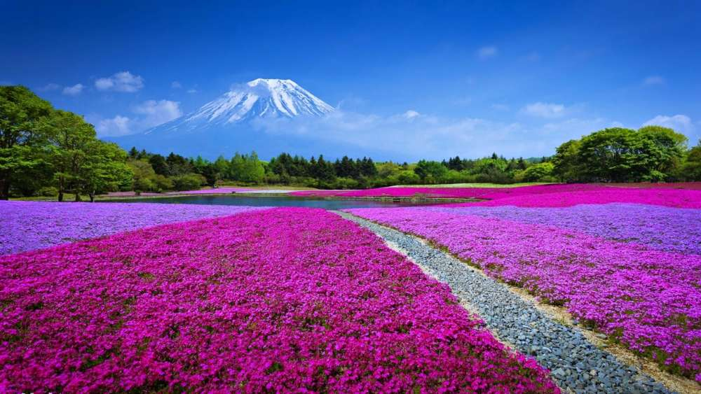 Mount Fuji landscape, Japan  wallpaper