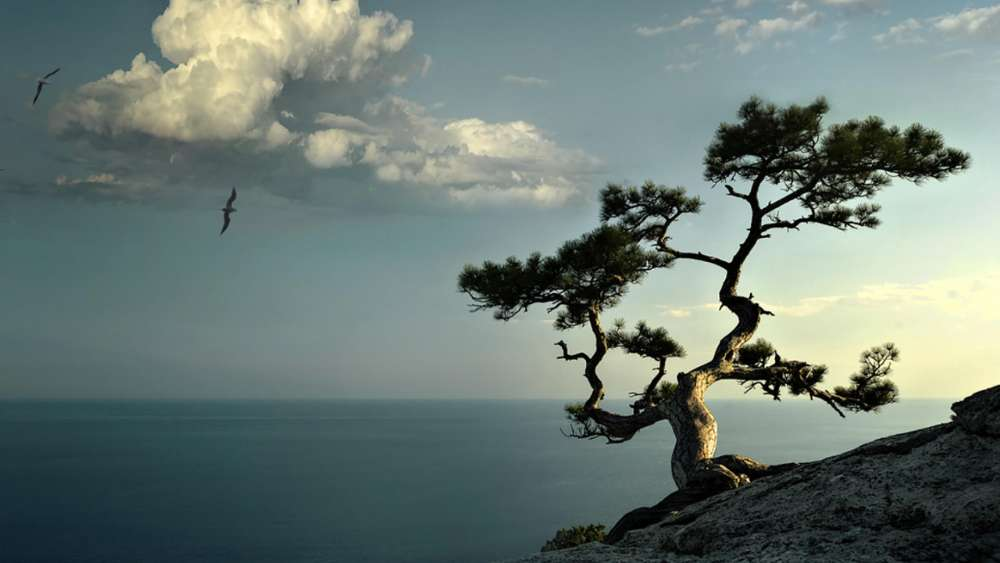 Lone tree on the rocky ridge wallpaper
