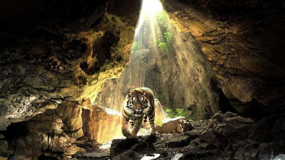 Tiger in the cave wallpaper