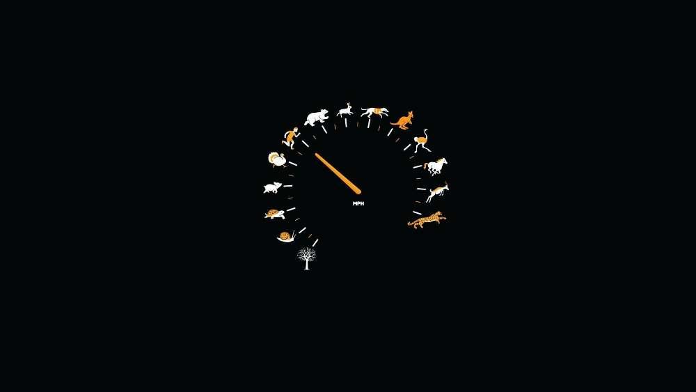 Funny speedometer wallpaper