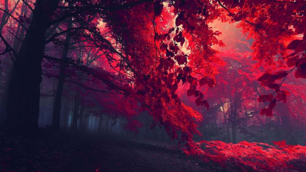 Sinsational Sintra - Misty red autumn forest wallpaper