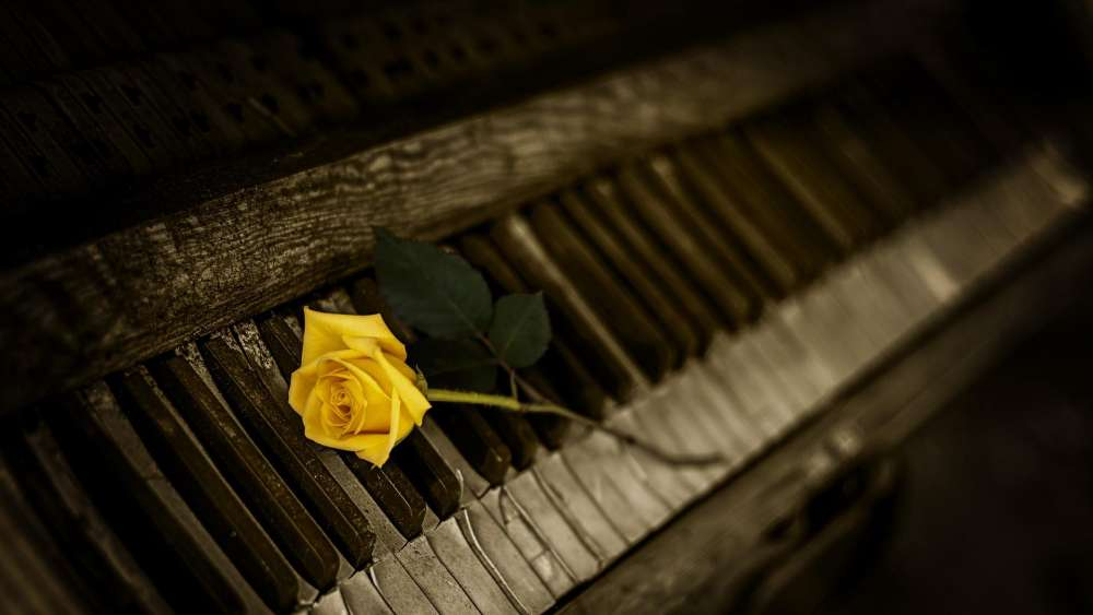 Yellow rose on the piano wallpaper