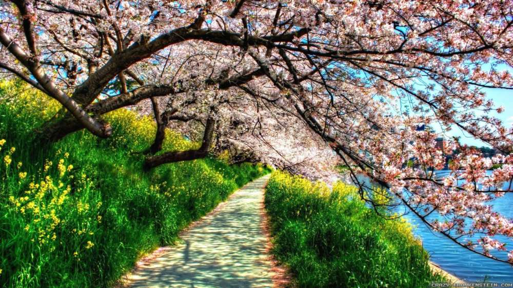 Spring cherry blossom  wallpaper