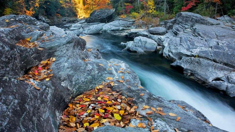 Autumn leaves on the rocks   wallpaper