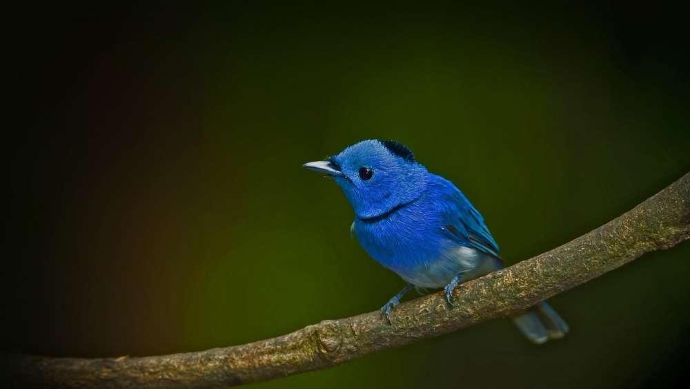 Blue bird on a twig wallpaper