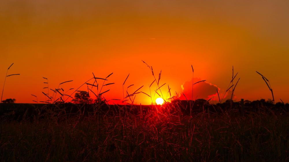 Brazilian sunset wallpaper