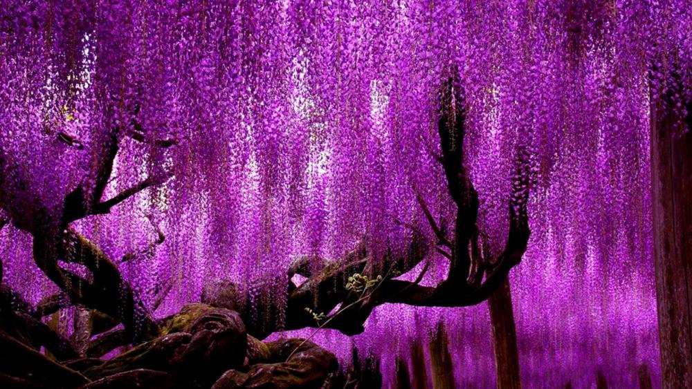 Ashikaga Flower Park wallpaper