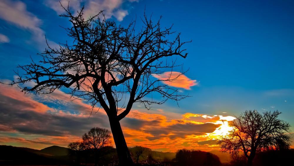 Bald tree at sunset wallpaper