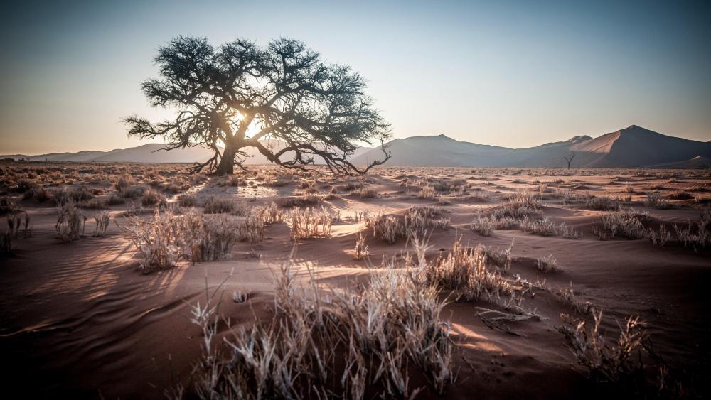 Desert sunrise wallpaper