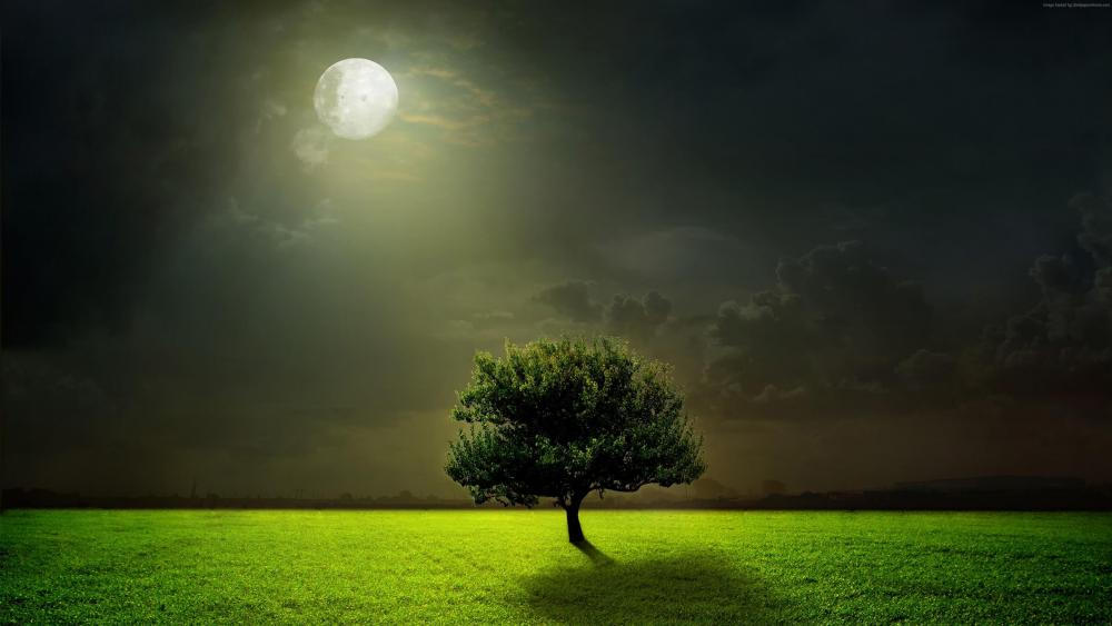 Lonely tree in the moonlight  wallpaper