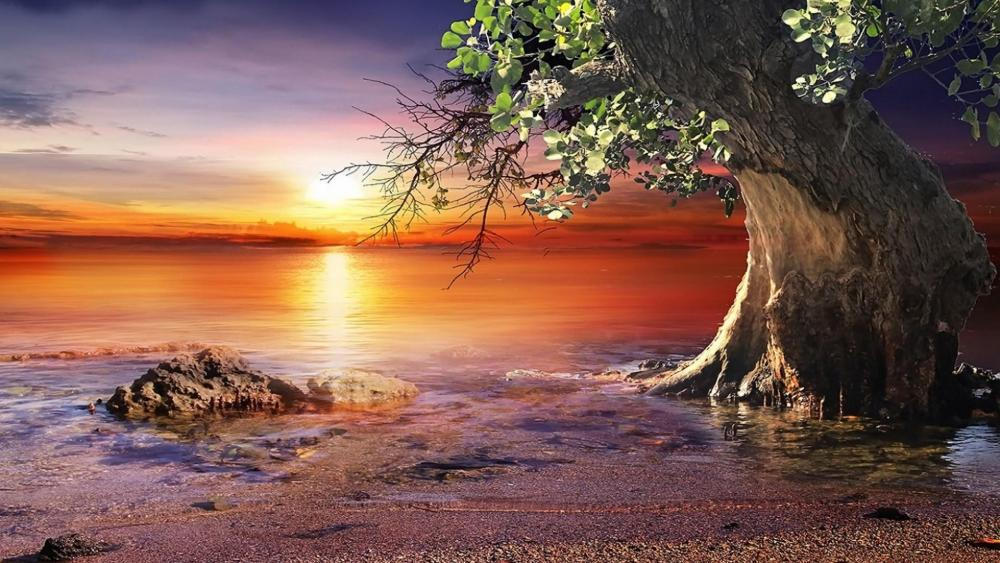 Lonely tree in sunset wallpaper