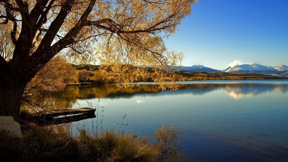 Lone Tree of Lake Alexandrina New Zealand wallpaper