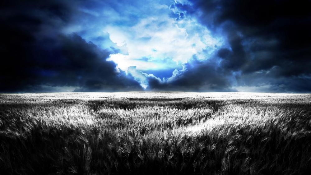 Stormy night above the wheat field wallpaper