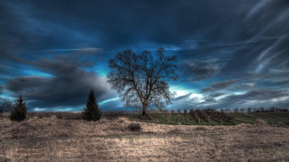 Cloudy dark field with a lonely tree wallpaper