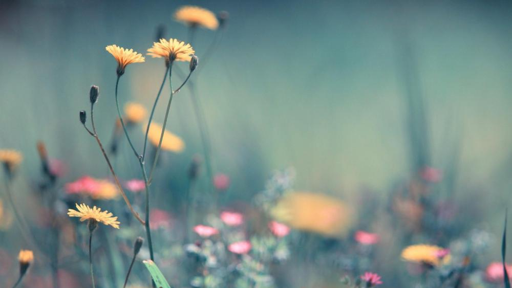 Pretty yellow wild flowers wallpaper