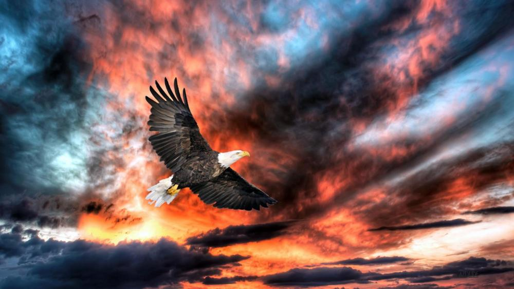 Bald Eagle flying on clouds at sunset wallpaper