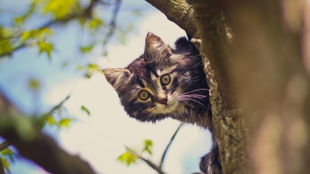 Cat on the tree wallpaper