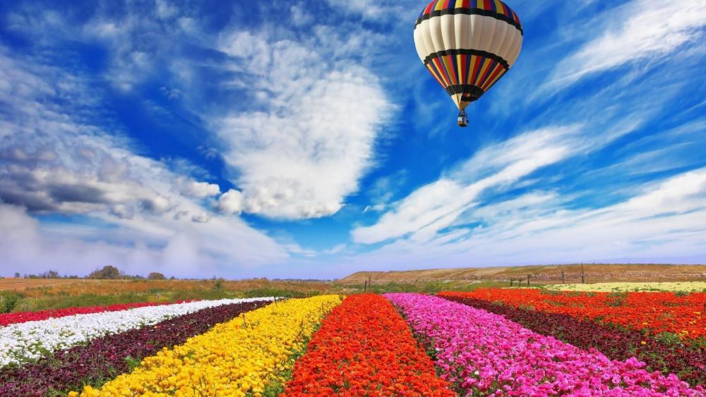 Air balloon on the sky wallpaper