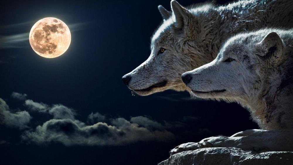 Wolves in full moon wallpaper
