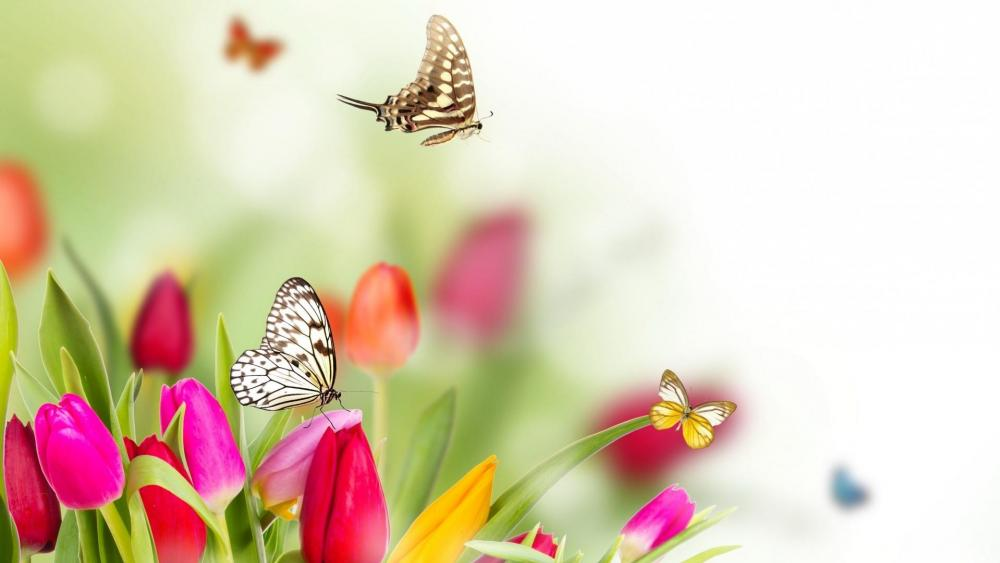Butterfly in tulip wallpaper