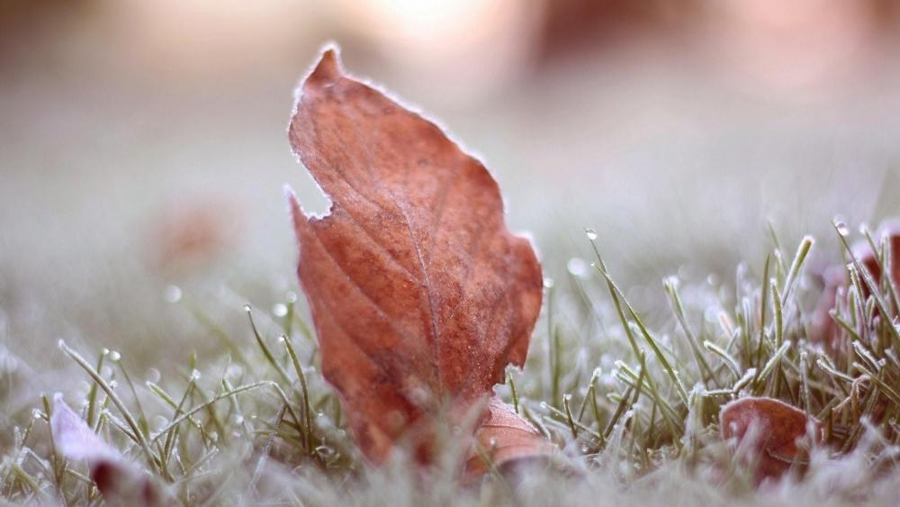 Frozen leaf on the grass ️ wallpaper