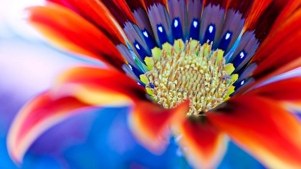 Macro Gerbera flower  wallpaper