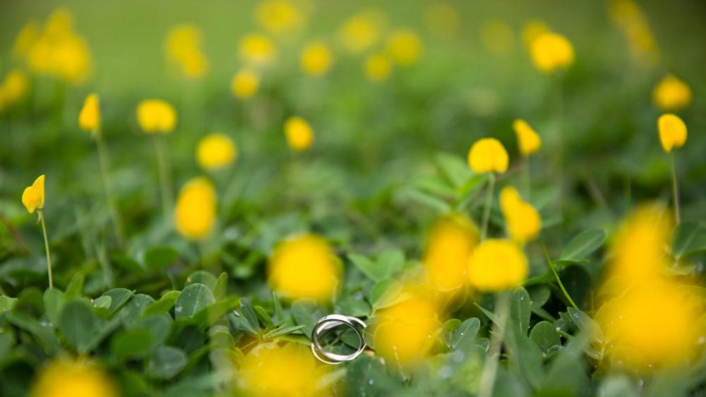 Rings in the grass wallpaper