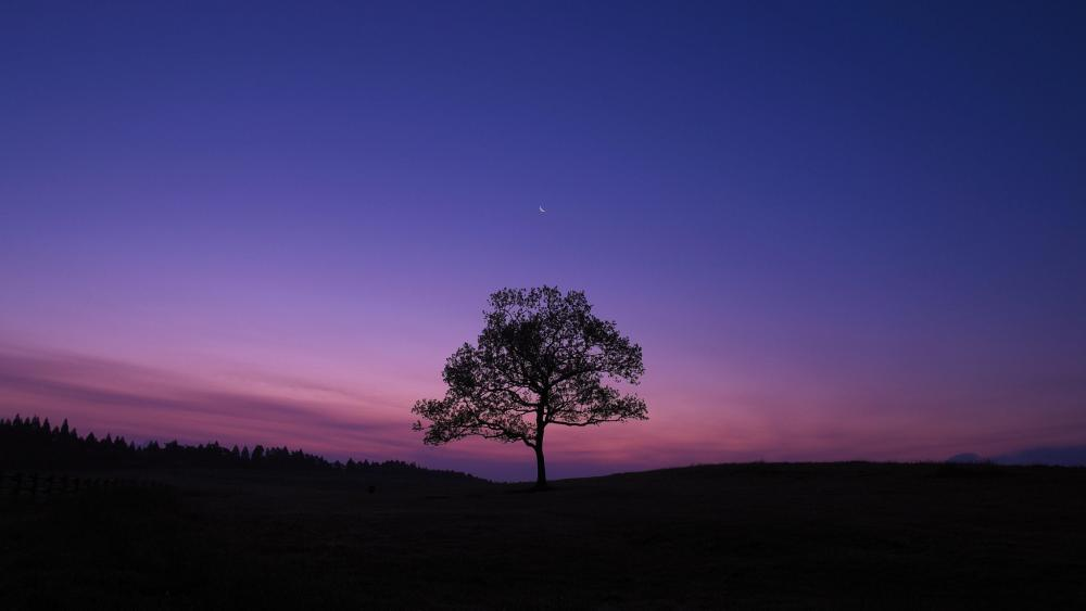 Lonely tree at night wallpaper