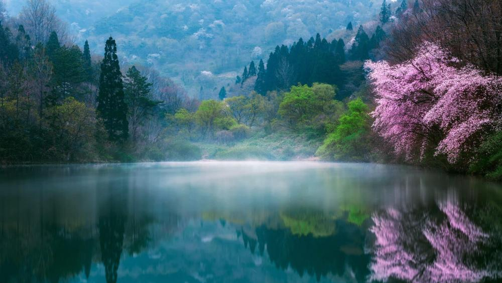 Lake in South Korea wallpaper