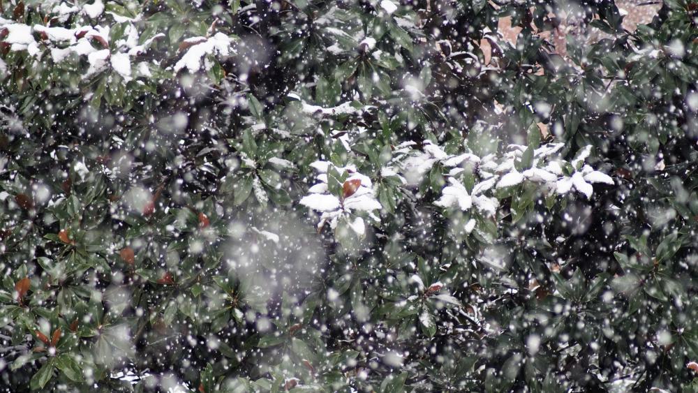 Snowing in the garden wallpaper