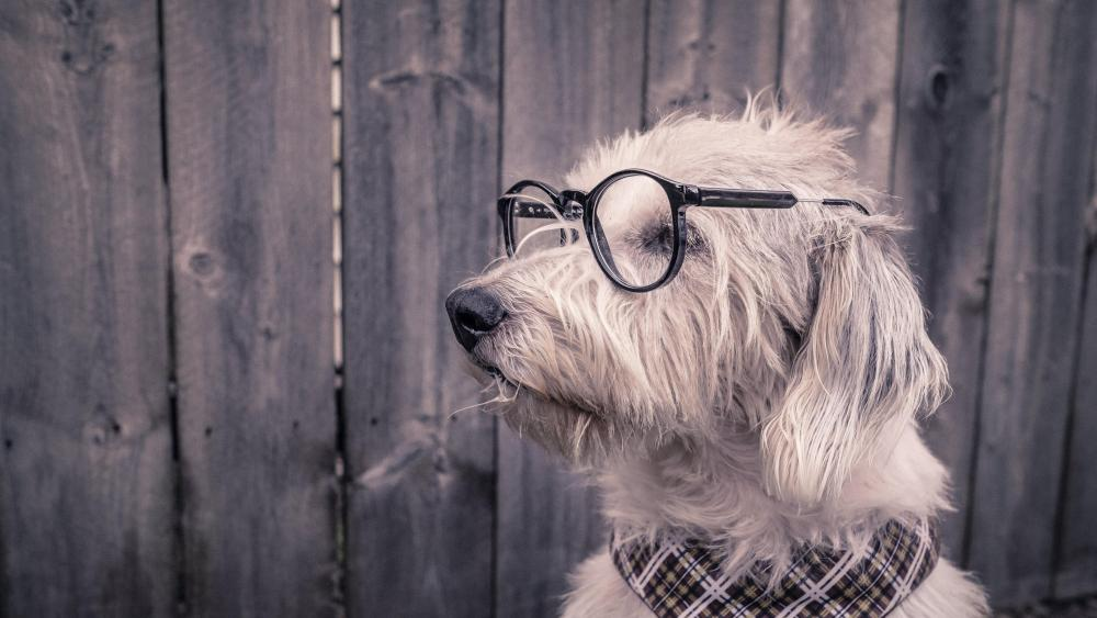 Funny dog in eyewear  wallpaper