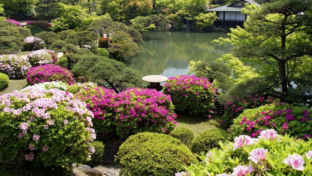 Blooming Japanese garden wallpaper