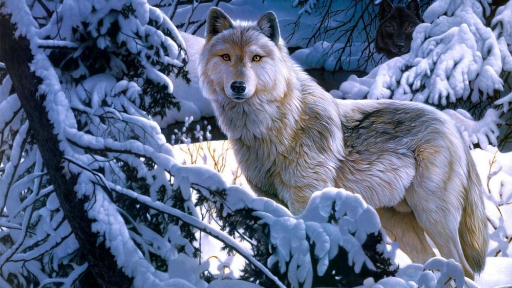 Wolf - Fantasy art  wallpaper