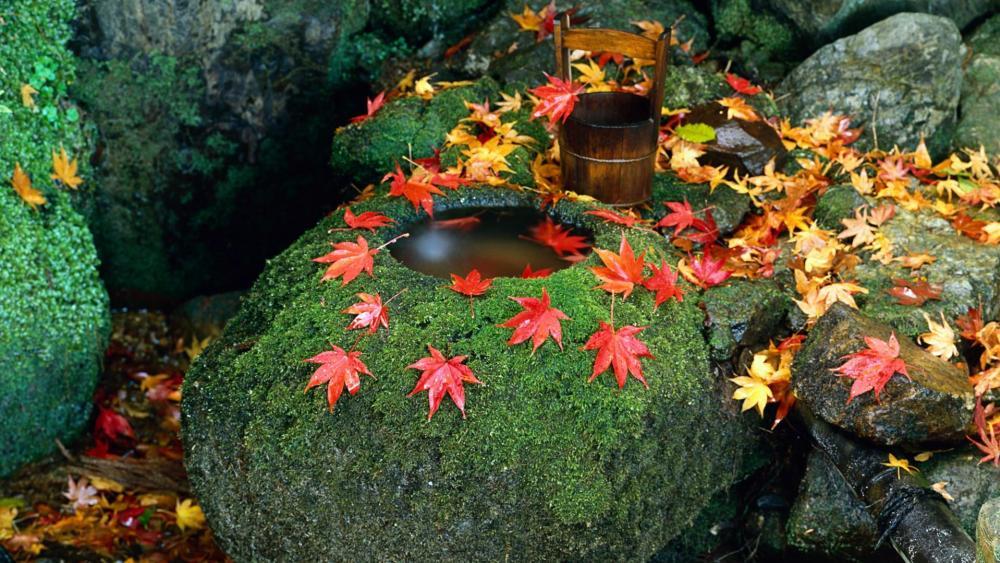 Tsukubai stone water basin with maple leaves wallpaper