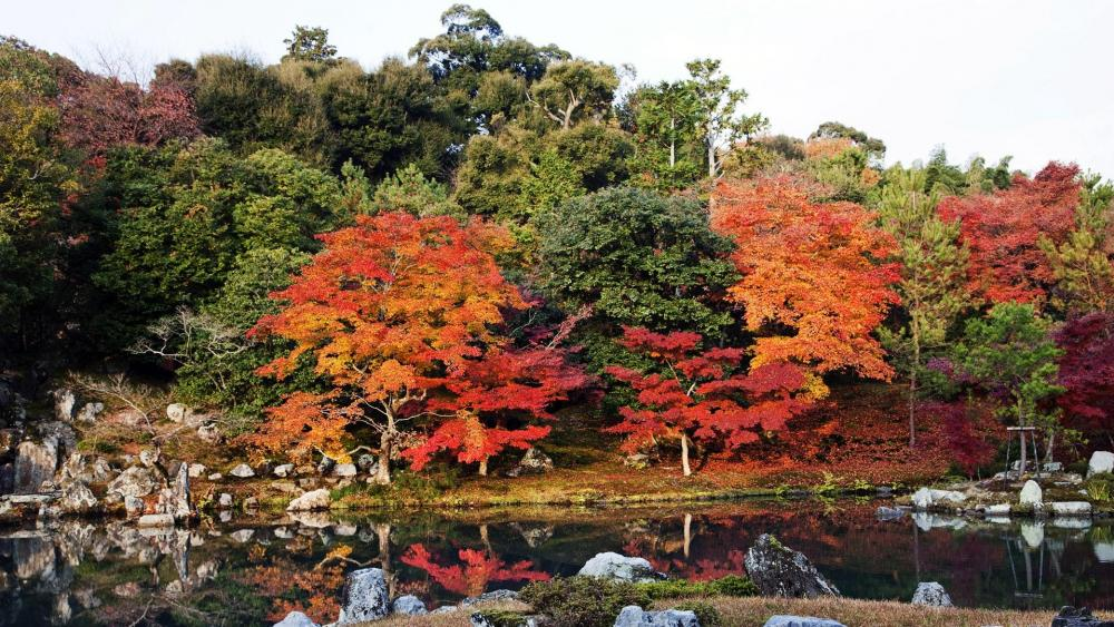 Autumn in a Japanese garden  wallpaper