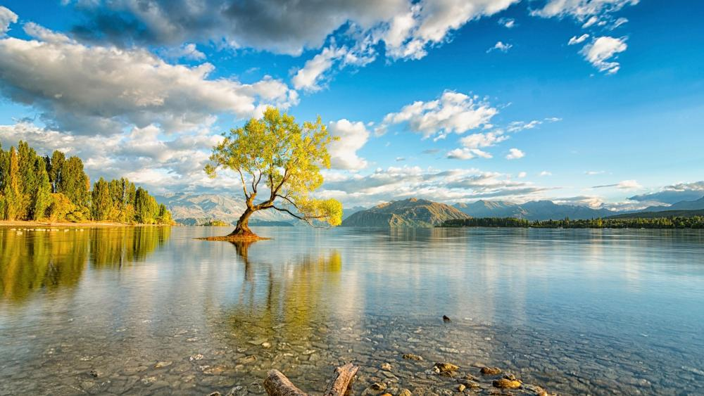 Lone tree of Lake Wanaka - New Zealand  wallpaper