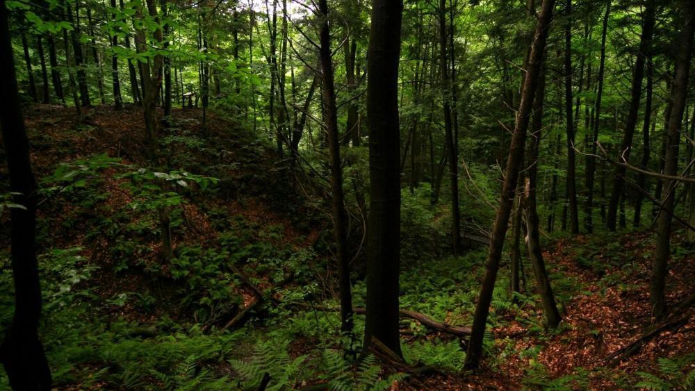 Dense forest wallpaper
