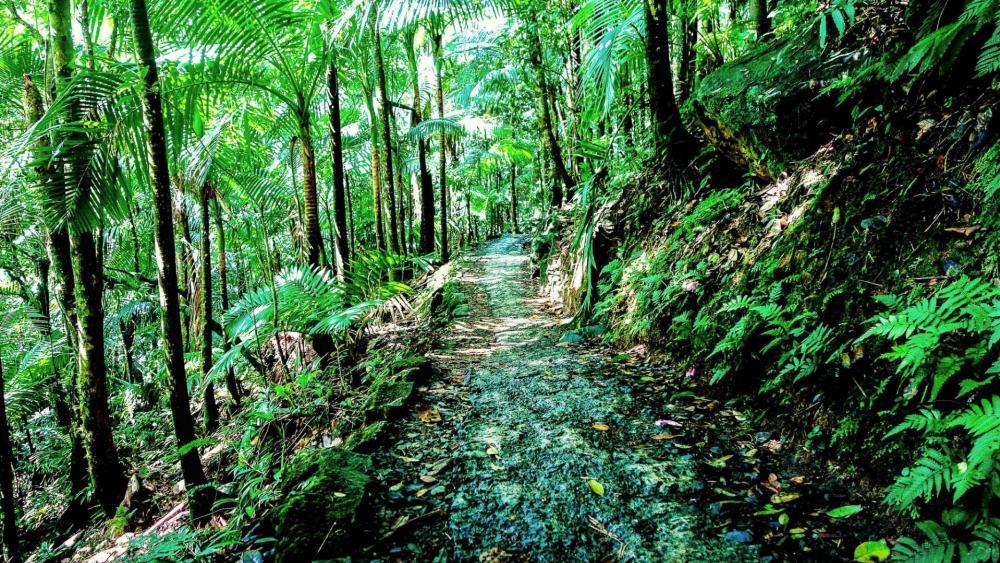 El Yunque National Forest - Puerto Rico wallpaper
