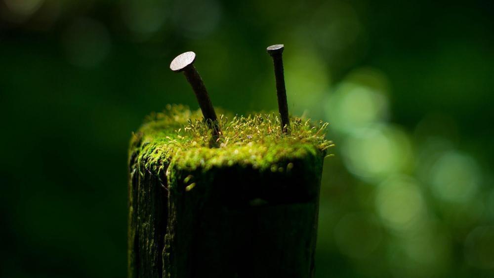 Mossy macro photography wallpaper