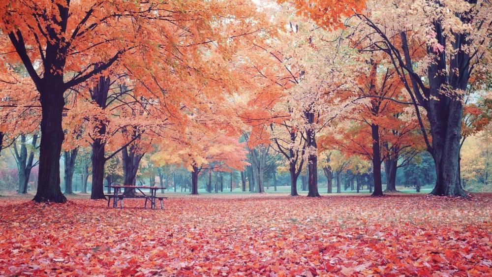 Fall Autumn Colors wallpaper