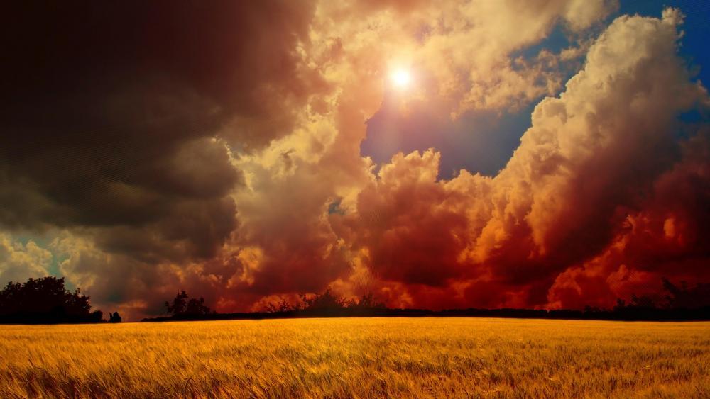 Golden sunset above the wheat field  wallpaper