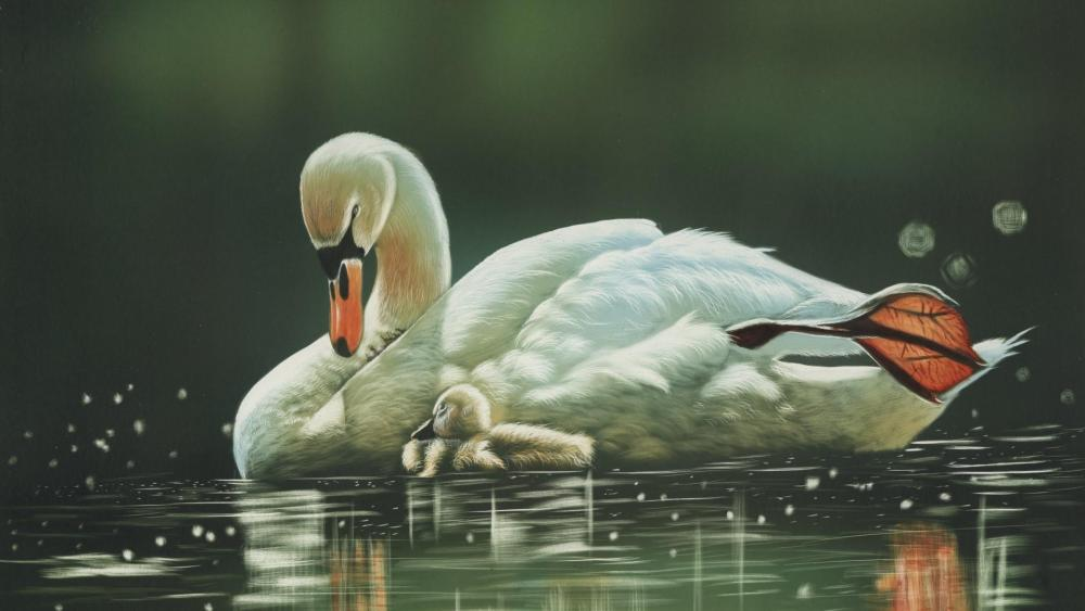 Swan family wallpaper