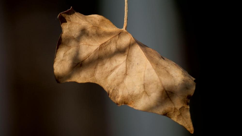 Brown leaf wallpaper