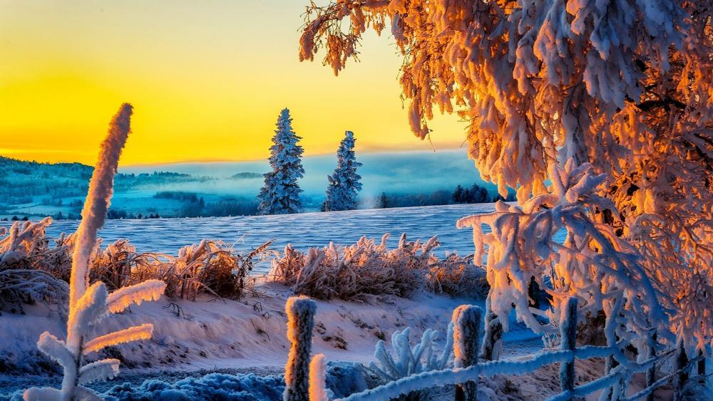 Amazing winter sunset ❄️☀️ wallpaper