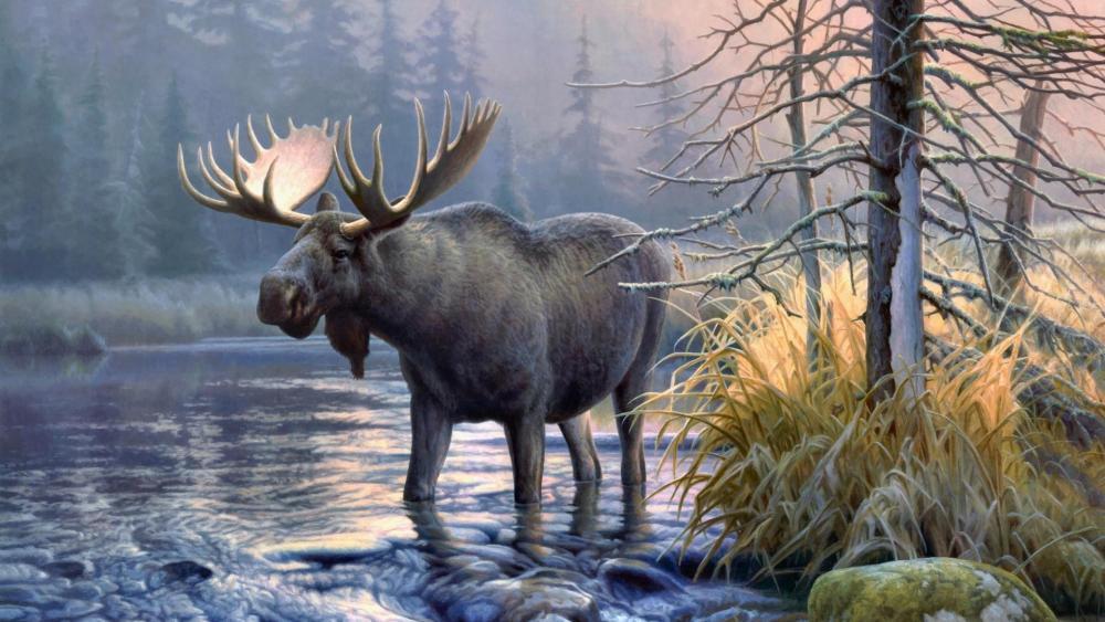 Moose in the lake wallpaper